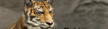 0004_Making_of_Tiger_Zoo_Banner